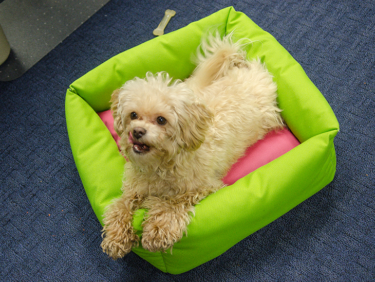How To Make A Dog Bed Sailrite