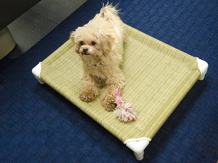 Your pet can sleep in style with this elevated PVC pet bed.